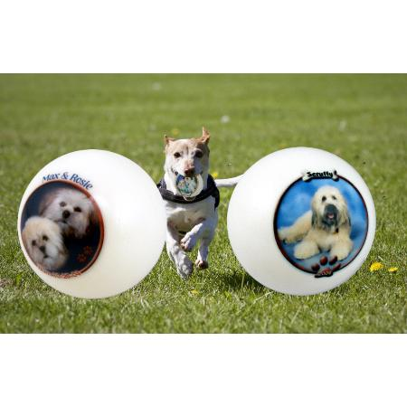 Photo Dog Ball Example